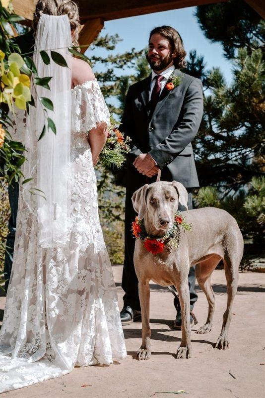 Courtney30-Lynn-colorado-adventure-elopement-packages-destination-wedding-photographer-estes-park-elope-dog