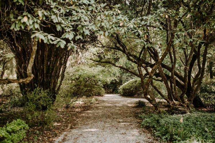 mt-wilson-blue-mountains-elopement-wedding-destination-packages-coronavirus-intimate-outdoor-autumn-fall-gardens-hayleyrafton-setting-elope-australia-sydney