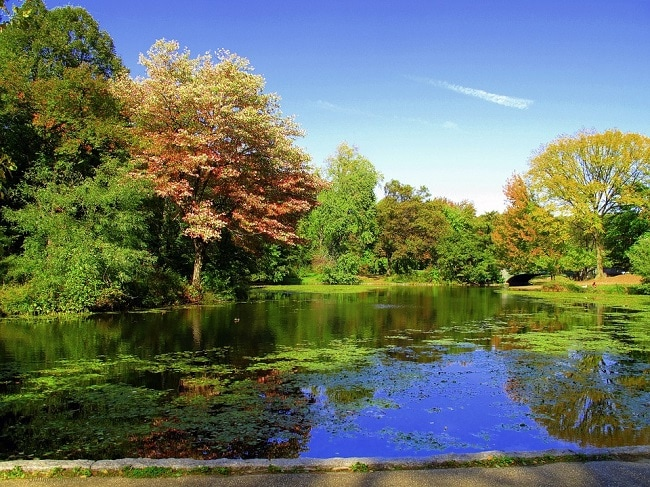 prospect-park-brooklyn-best-places-to-elope-in-new-york-elopement-destination-wedding-big-apple-intimate-ceremony-small-outdoor-adventure-nyc1