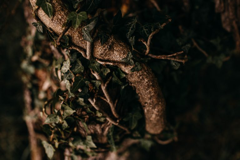 unfurl21-photography-woodland-elopement-wedding-inspiration-outdoor-enchanted-forest-intimate-ceremony-elope-boho-tree-ivy
